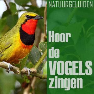De Vogels 歌手頭像
