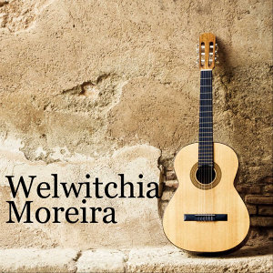 Welvitchia 歌手頭像