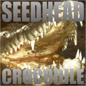 Seedhead 歌手頭像