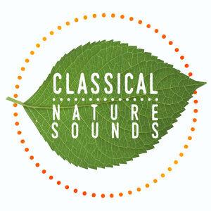 Nature Sounds Nature Music Sleep Sounds of Nature Sounds of Nature 歌手頭像