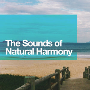 Rest & Relax Nature Sounds Artists, Sleep Music with Nature Sounds Relaxation, Sleep Songs with Nature Sounds 歌手頭像