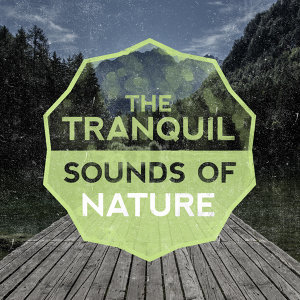 The Healing Sounds of Nature, Tranquil Music Sounds of Nature 歌手頭像