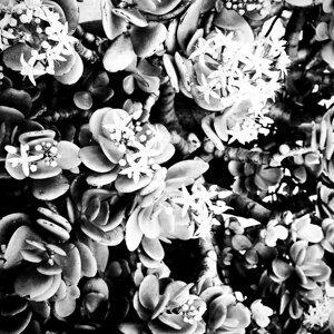 Rose アーティスト写真