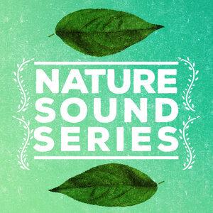 Nature Sound Series, Nature Sounds, Nature Sounds Nature Music 歌手頭像