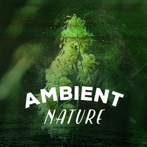 Nature Sounds for Concentration, Nature Ambience, Nature Sounds 歌手頭像