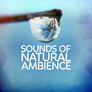 Rest & Relax Nature Sounds Artists|Nature Sound Series|Nature Sounds 2015 歌手頭像