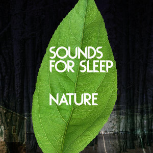 Nature Sound Series, Nature Sounds for Sleep and Relaxation, Nature Sounds Nature Music 歌手頭像