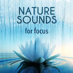 Deep Sleep Meditation, Exam Study Nature Music Nature Sounds, Green Nature SPA 歌手頭像