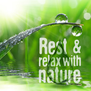 Rest & Relax Nature Sounds Artists, Sleep Sounds of Nature 歌手頭像