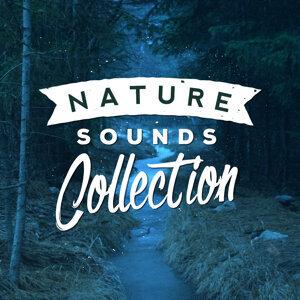 Nature Sounds, Nature Sounds Nature Music, Sonidos de la naturaleza Relajacion 歌手頭像