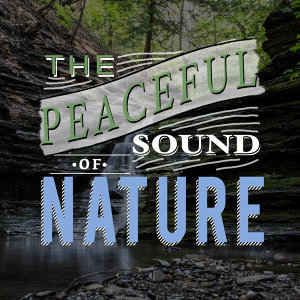 Ambiance nature, Bruits naturels, Nature Sounds Radio 歌手頭像
