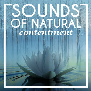 Tranquil Music Sounds of Nature, Rest & Relax Nature Sounds Artists, Sleep Sounds of Nature 歌手頭像