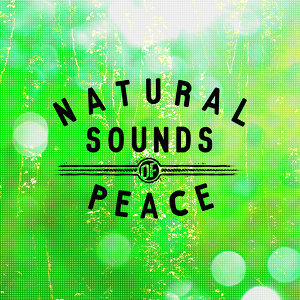 Relaxing With Sounds of Nature and Spa Music Natural White Noise Sound Therapy, Rest & Relax Nature Sounds Artists, Sleep Sounds of Nature 歌手頭像