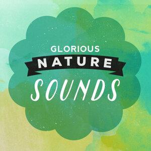 Nature Sound Collection, Nature Sounds Nature Music, Sonidos de la naturaleza Relajacion 歌手頭像