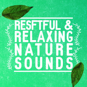Rest & Relax Nature Sounds Artists, Sleep Sounds of Nature, Sonidos de la naturaleza Relajacion 歌手頭像