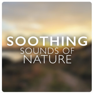 Soothing Sounds, Green Nature SPA, Nature Sounds 歌手頭像