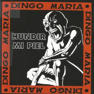 Dingo Maria 歌手頭像