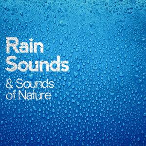Rain Sounds|Nature Sounds|Sounds of Nature 歌手頭像