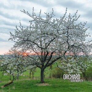 Orchard 歌手頭像