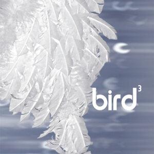 Bird3 歌手頭像