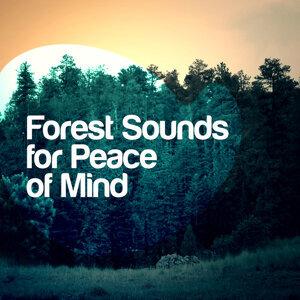 Natural Sounds, Nature Sounds - Sons de la nature, Soothing Sounds 歌手頭像