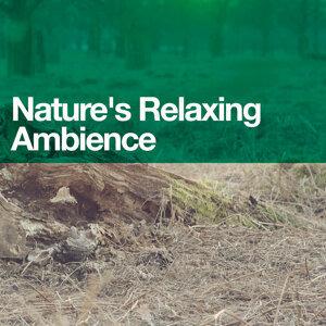 Ambiance nature, Sonidos de la naturaleza Relajacion, Tranquil Music Sounds of Nature 歌手頭像