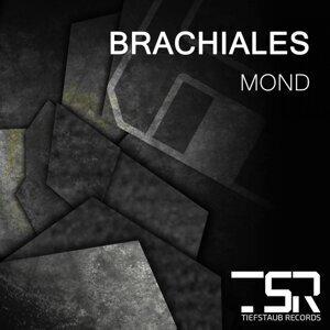 Brachiales 歌手頭像
