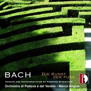 Orchestra di Padova e del Veneto, Marco Angius 歌手頭像
