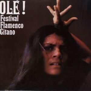 Festival Flamenco Gitano - Ole! 歌手頭像