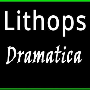Lithops 歌手頭像