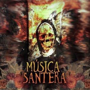 Musica De Palo 歌手頭像