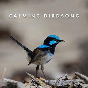 Calm Bird Sounds 歌手頭像