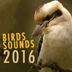 Bird Sounds 2016 歌手頭像