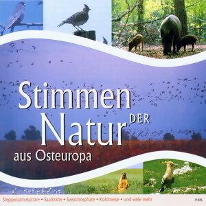 Stimmen der Natur aus Osteuropa 歌手頭像