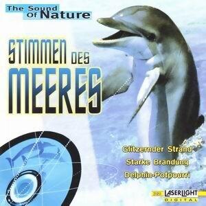 Stimmen des Meeres 歌手頭像
