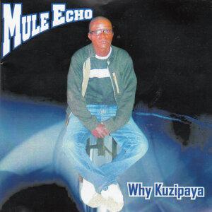 Mule Echo 歌手頭像