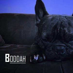 Boddah 歌手頭像
