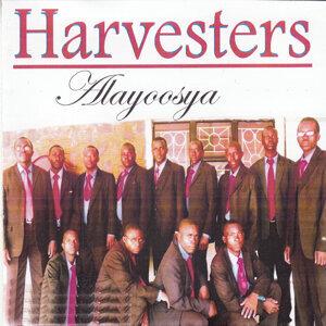 Harvesters 歌手頭像