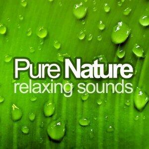 Pure Nature 歌手頭像