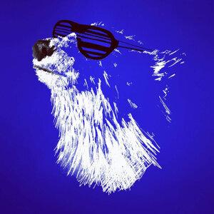 Polar Bears Can Dance 歌手頭像