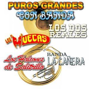 Los Muecas, Banda La Cañera, Los Halcones De Salitrillo, Los Dos Reales 歌手頭像