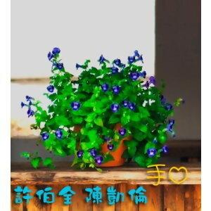 許伯全+陳凱倫 歌手頭像