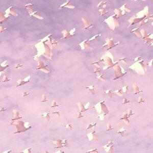 Colibri アーティスト写真