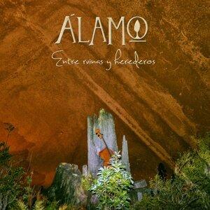 Alamo 歌手頭像