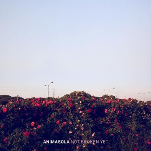 Animasola 歌手頭像
