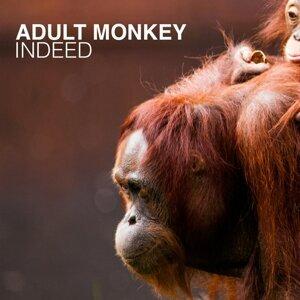 Adult Monkey 歌手頭像