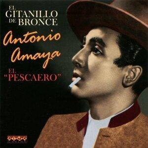 Antonio Amaya 歌手頭像