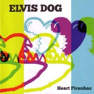 Elvis Dog 歌手頭像