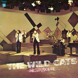 Wild Cats 歌手頭像