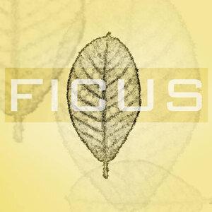 Ficus 歌手頭像
